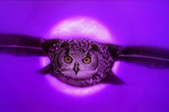 OWL-FINAL-NIGHT-Insta-e1606513462182